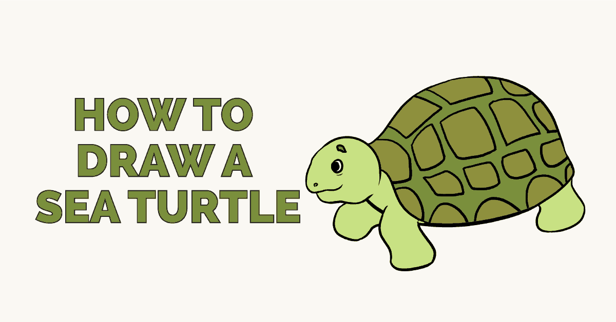 How to draw a sea turtle - featured image