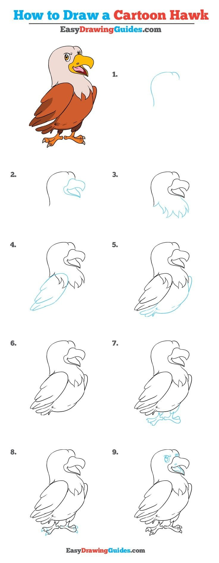 How to Draw Cartoon Hawk