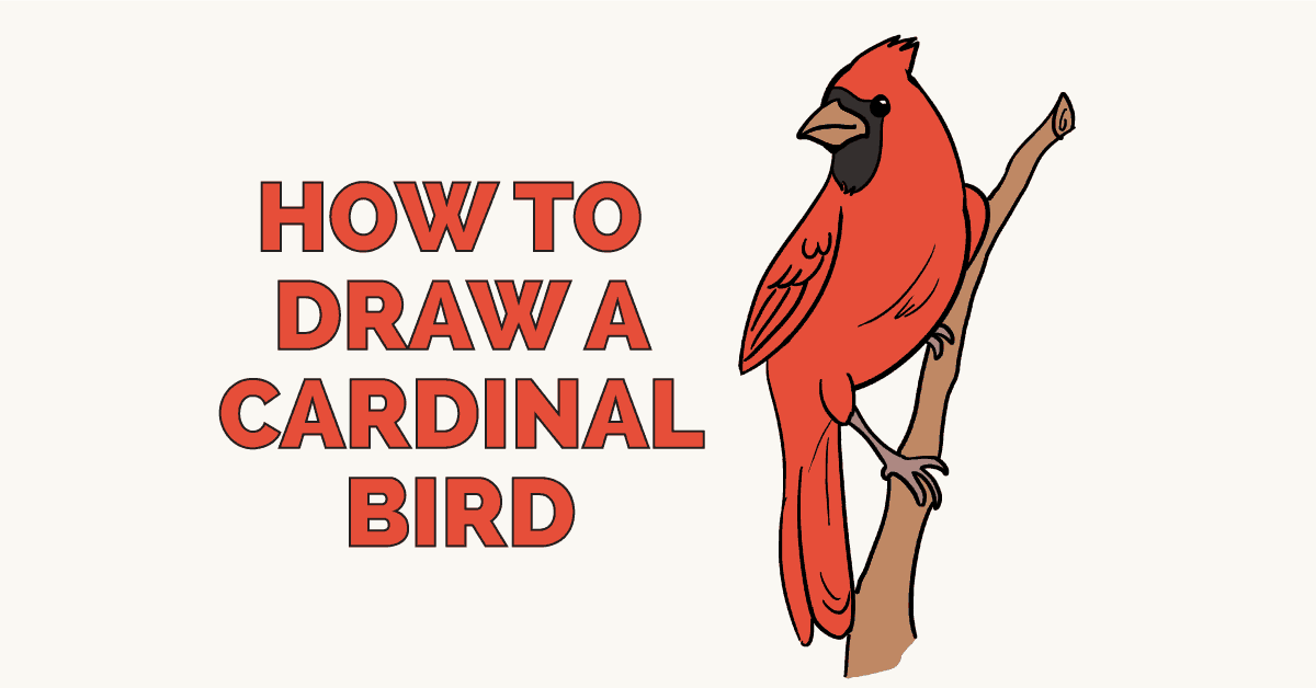 How to draw a cardinal bird featured image