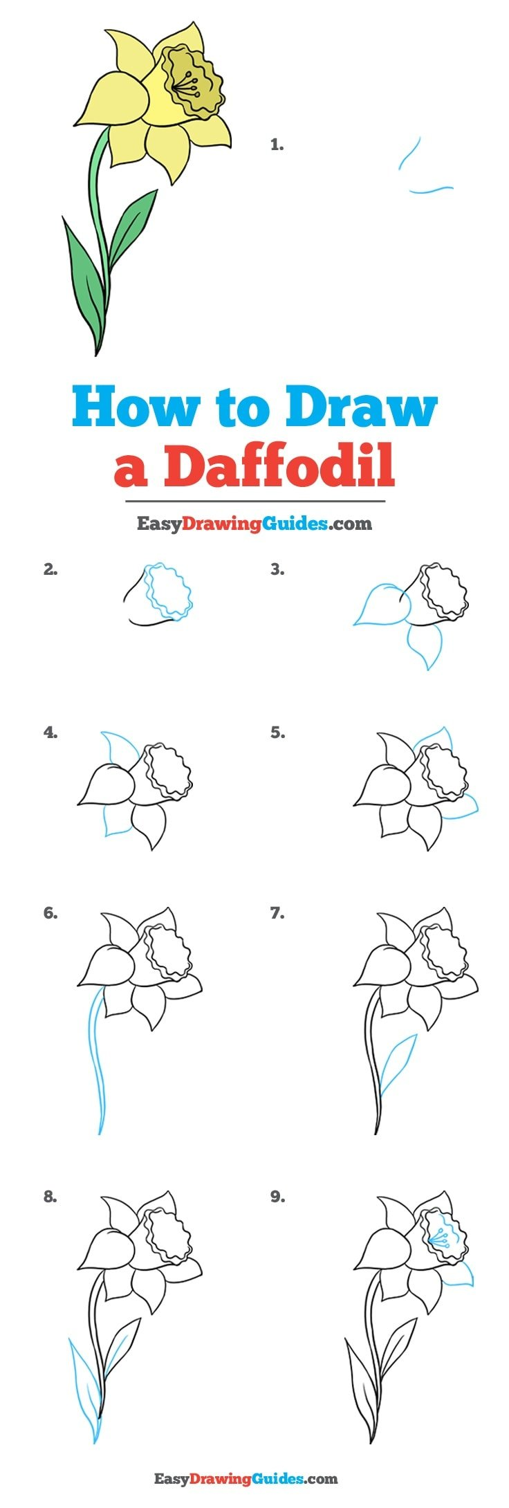 How to Draw Daffodil