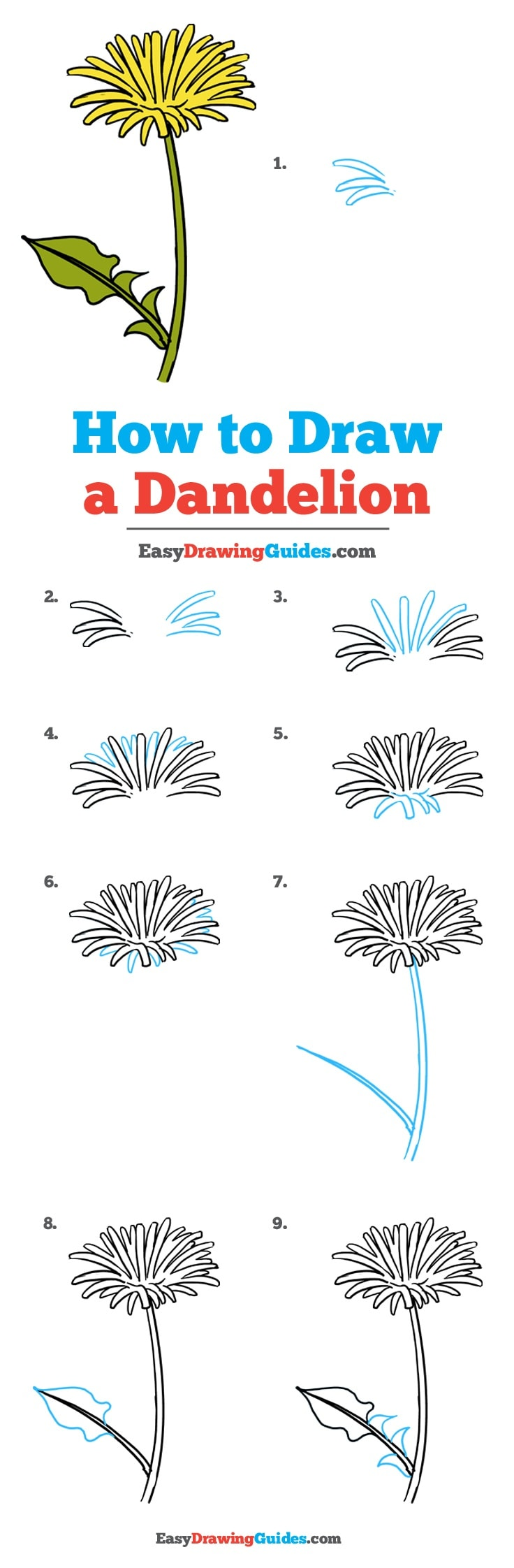 How to Draw Dandelion