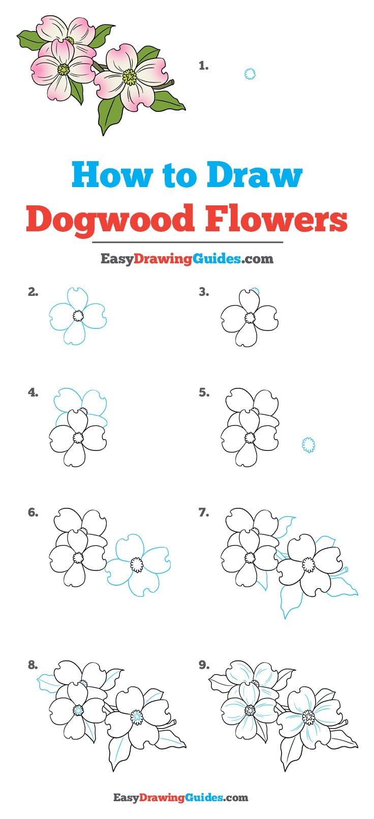 How to draw dogwood flowers: Step by step drawing tutorial