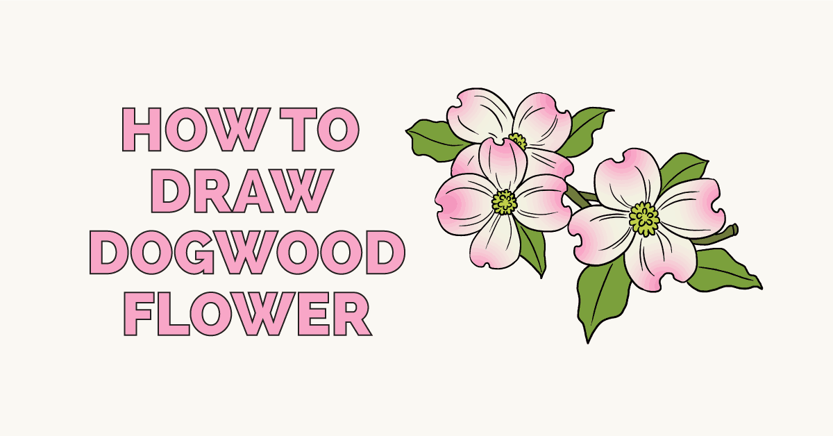 How to draw dogwood flowers: Featured image