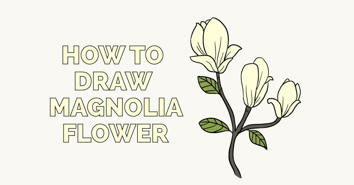 How to Draw Magnolia Flower: Featured Image
