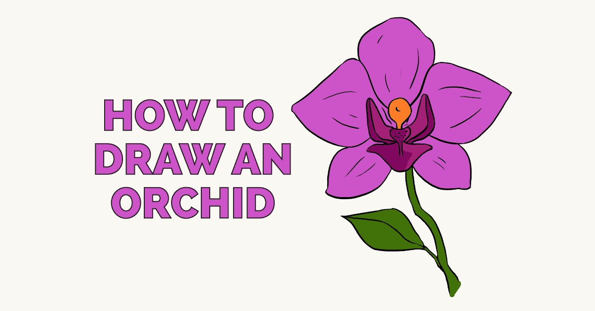 How to Draw an Orchid: Featured Image