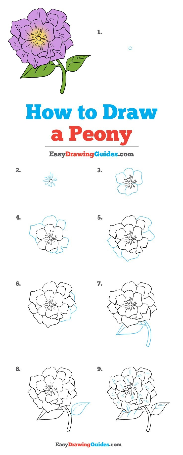 How to Draw Peony