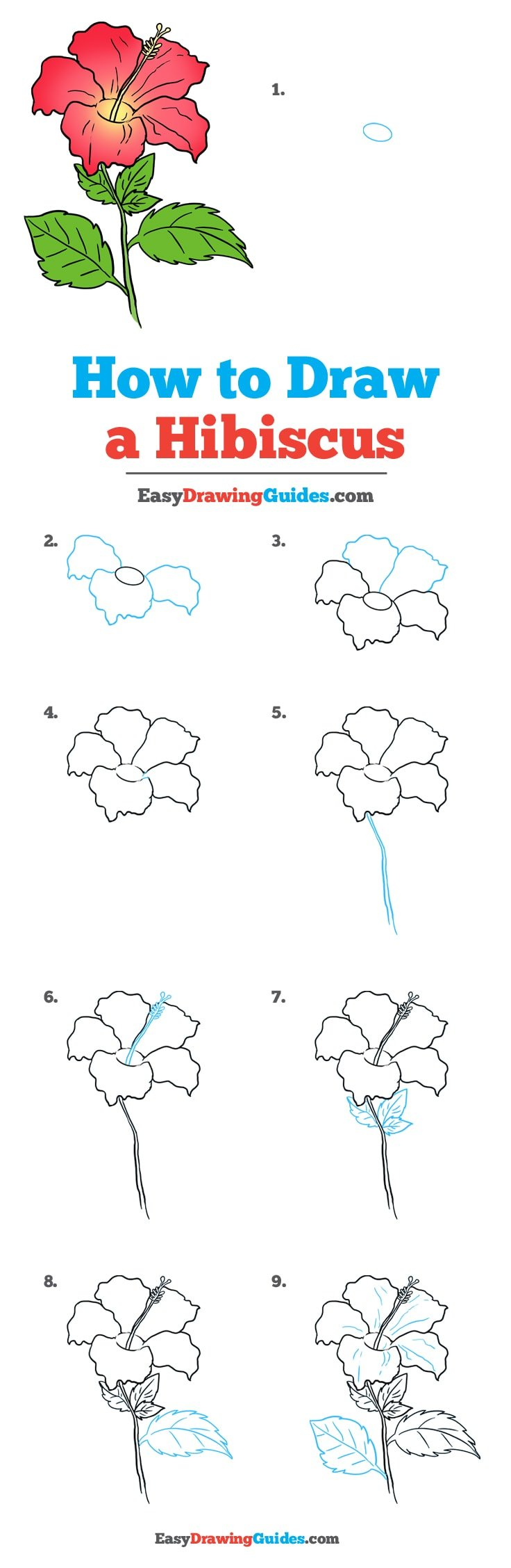 How to Draw Hibiscus