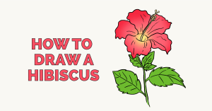 How to Draw Hibiscus: Featured Image