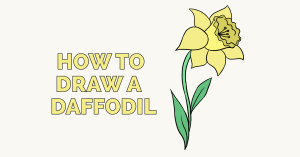 Learn how to draw a daffodil - featured image