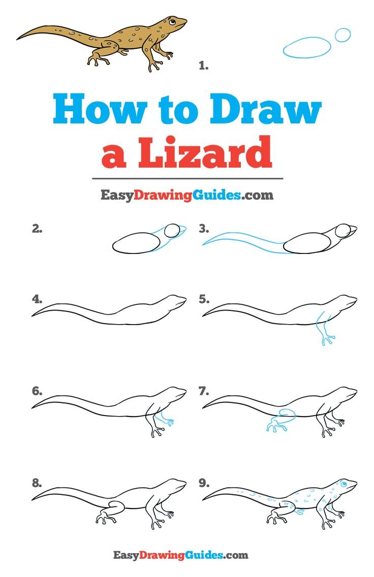 How to Draw Lizard