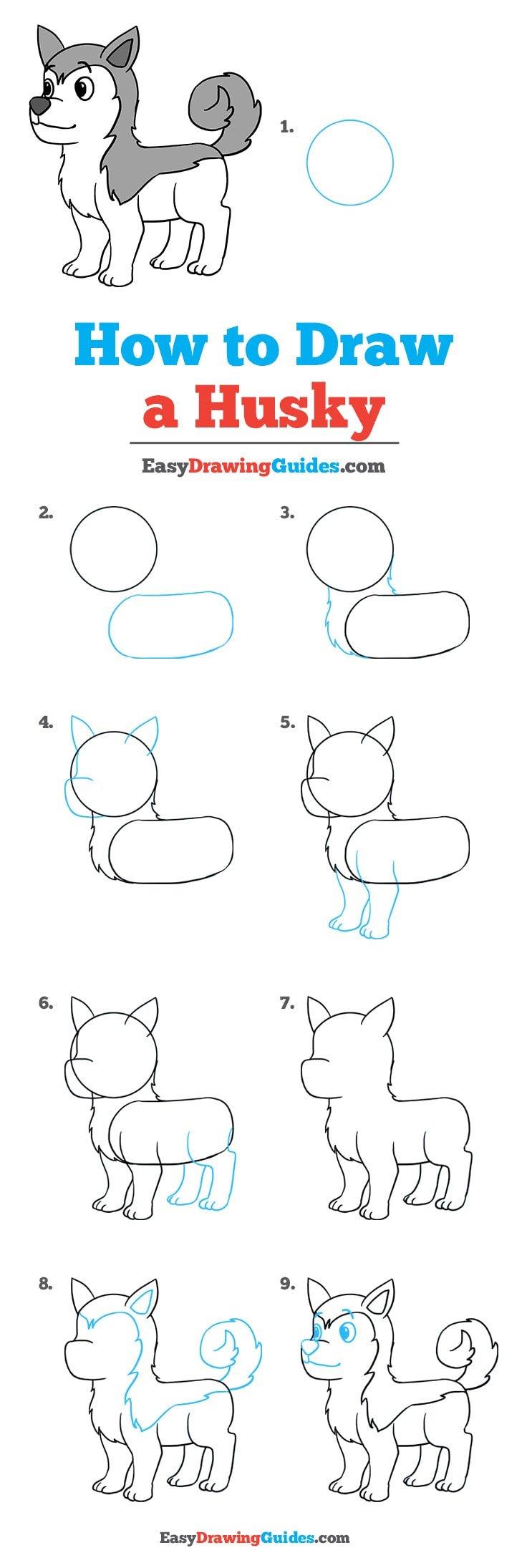 How to Draw Husky