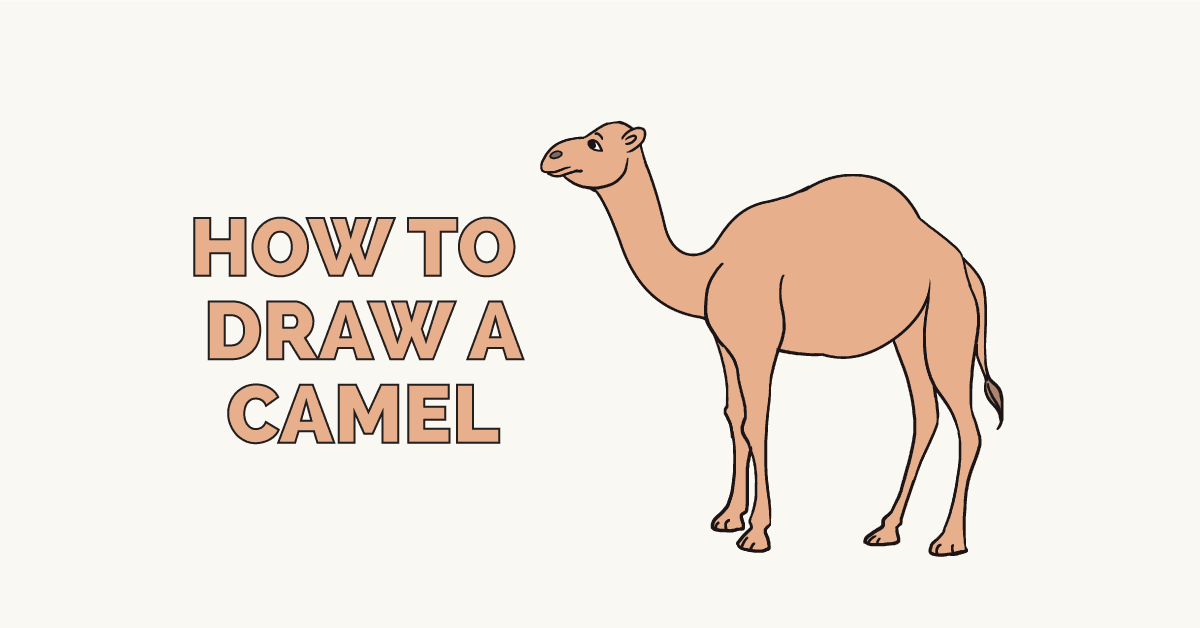 How to Draw a Camel: Featured Image