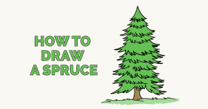How to Draw a Spruce: Featured Image
