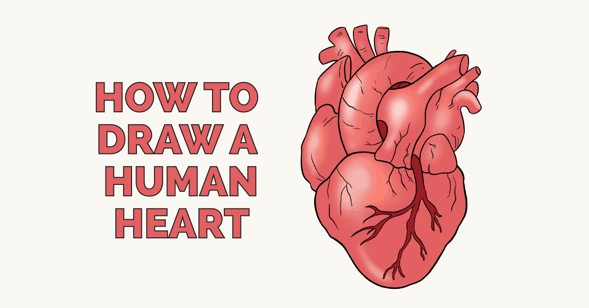 How to Draw a Human Heart - Really Easy Drawing Tutorial
