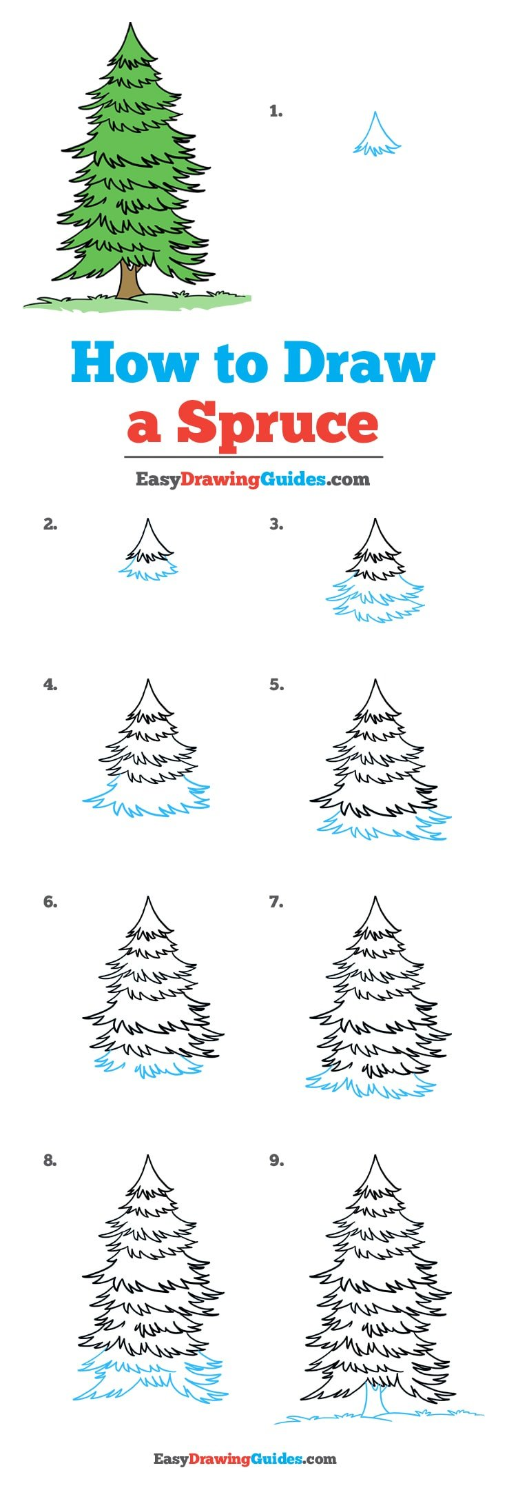 How to Draw Spruce