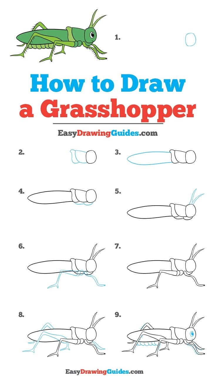 How to Draw a Grasshopper: Step by Step Tutorial