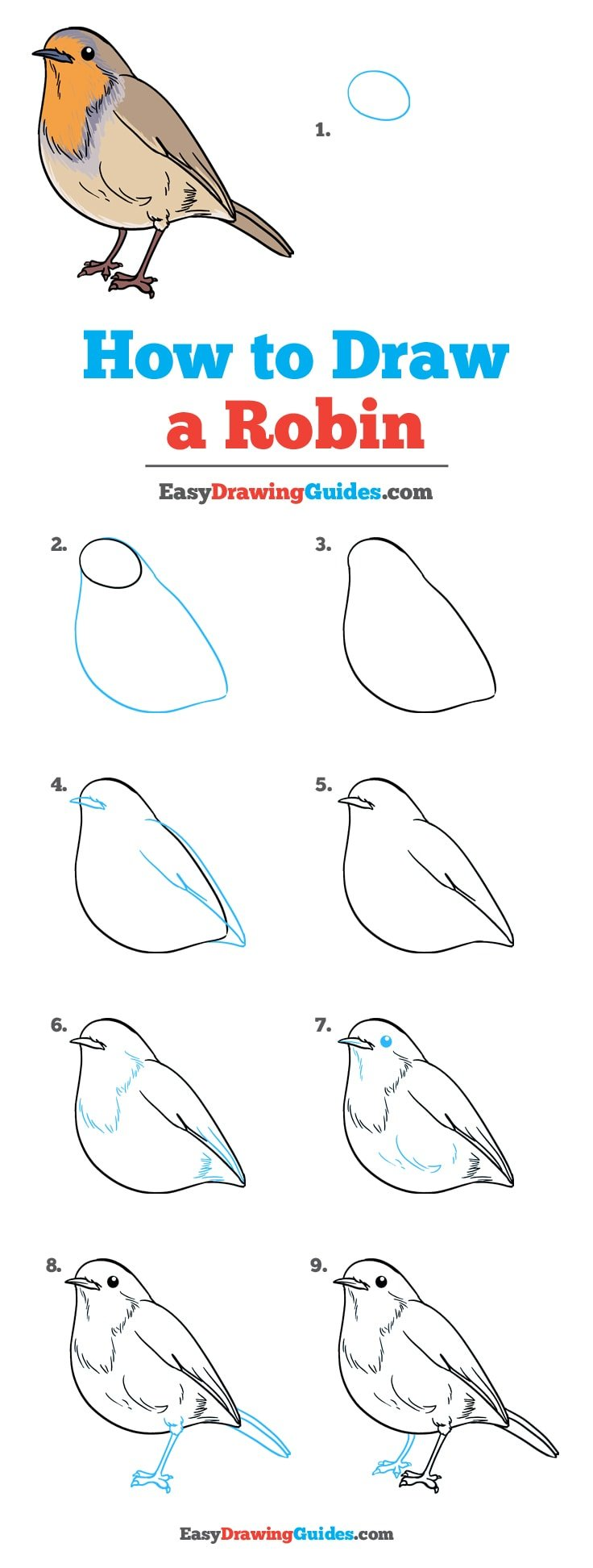 How to Draw Robin