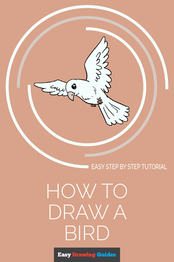 How to Draw Bird | Share to Pinterest