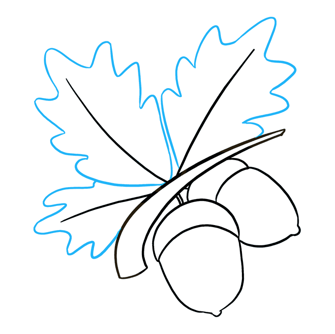 How to Draw Acorns: Step 8