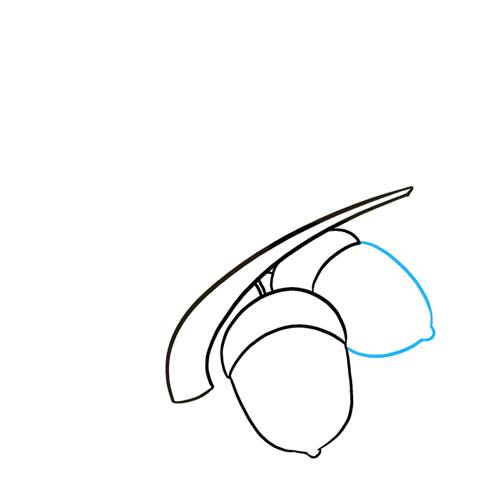 How to Draw Acorns: Step 6
