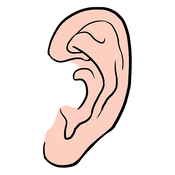 How to Draw Ear: Step 10