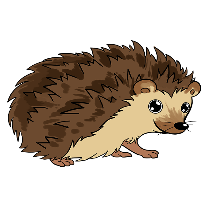 How to Draw Hedgehog: Step 10