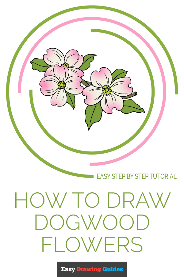 How to Draw Dogwood Flowers | Share to Pinterest