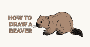 How to Draw a Beaver: Featured Image