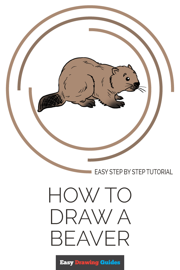How to Draw Beaver | Share to Pinterest