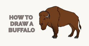 How to Draw a Buffalo: Featured Image