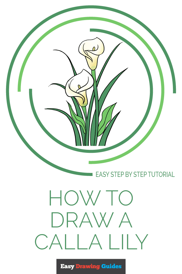 How to Draw Calla Lily | Share to Pinterest