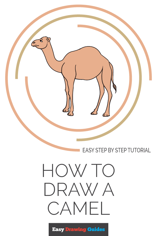 How to Draw Camel | Share to Pinterest