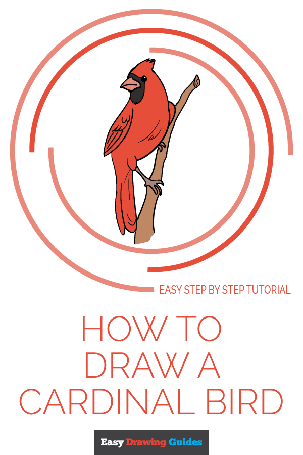 How to Draw Cardinal Bird | Share to Pinterest