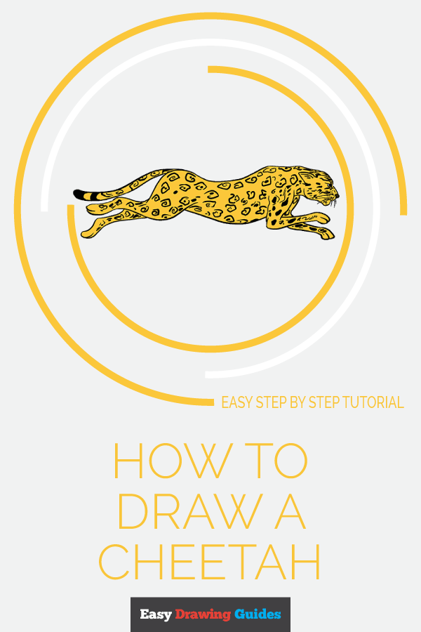 How to Draw Cheetah | Share to Pinterest
