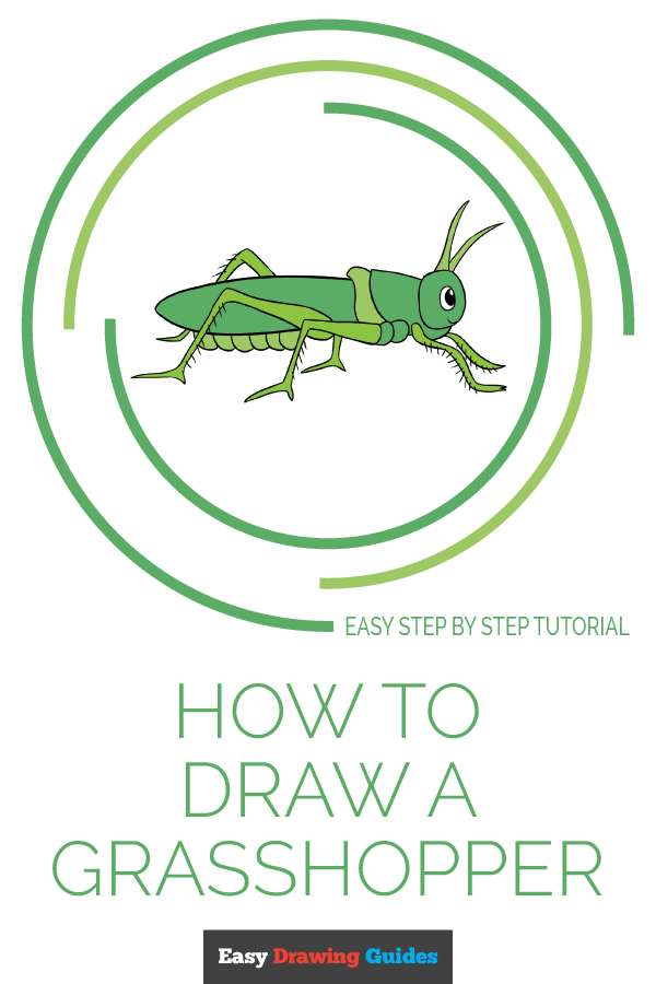 How to Draw a Grasshopper | Share to Pinterest