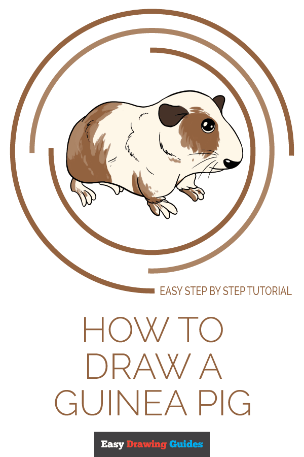 How to Draw Guinea Pig | Share to Pinterest