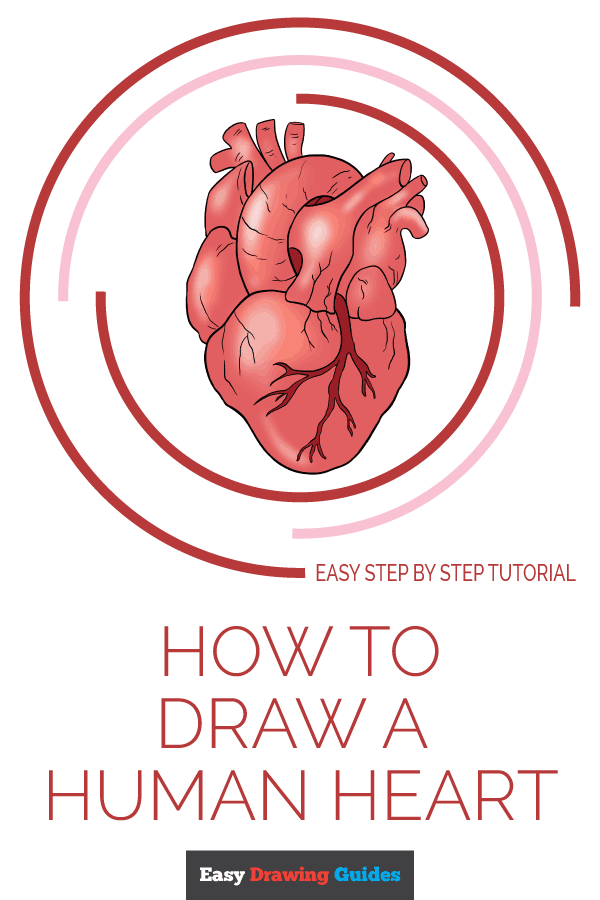 How to Draw Human Heart | Share to Pinterest