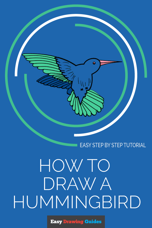 How to Draw Hummingbird | Share to Pinterest