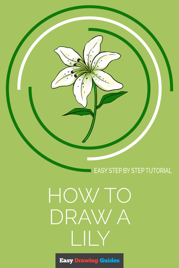 How to Draw Lily | Share to Pinterest