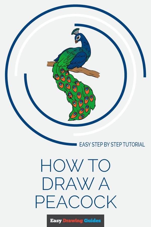 How to Draw Peacock | Share to Pinterest