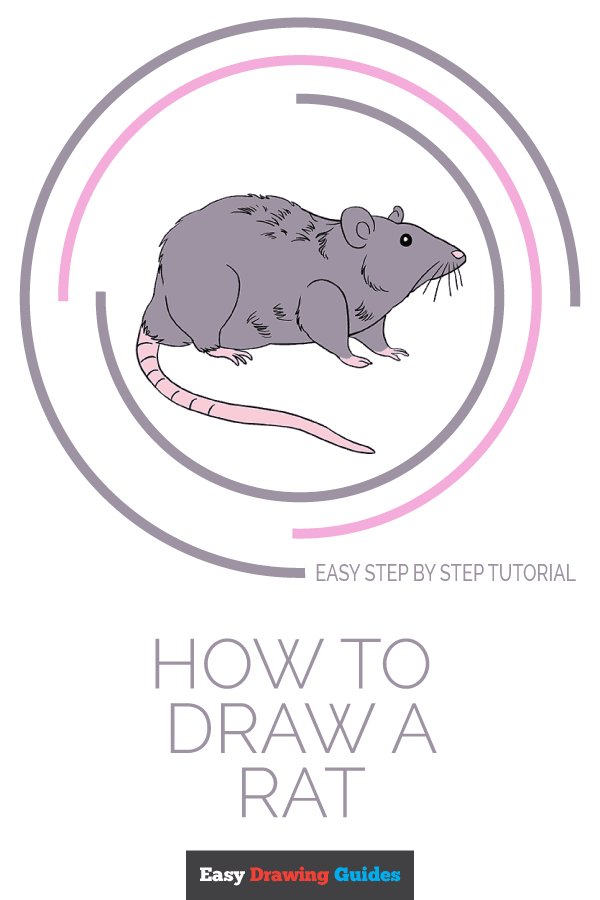 How to Draw a Rat | Share to Pinterest