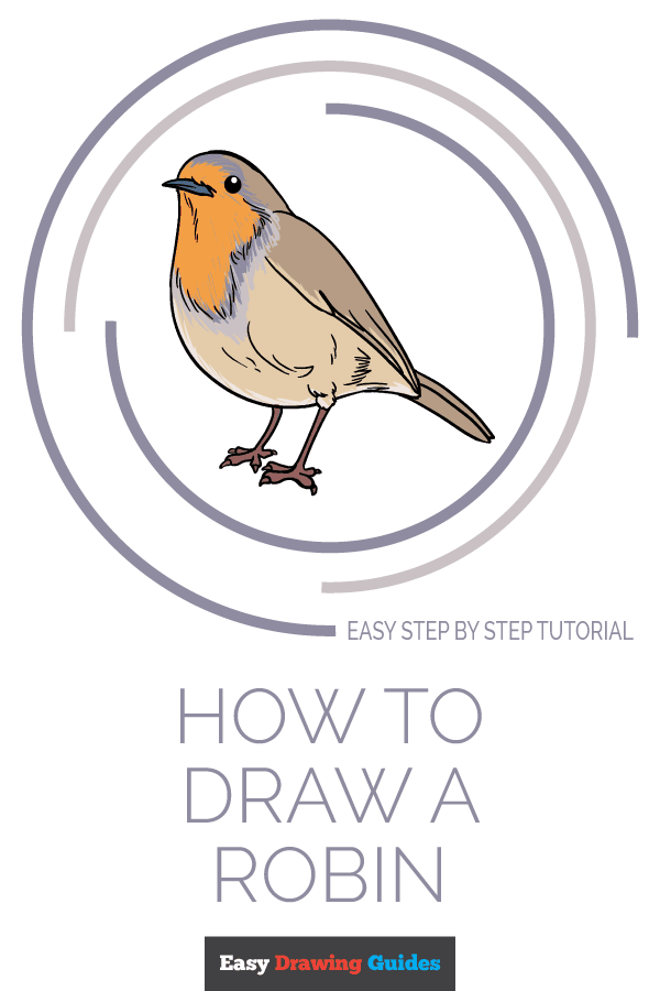 How to Draw Robin | Share to Pinterest