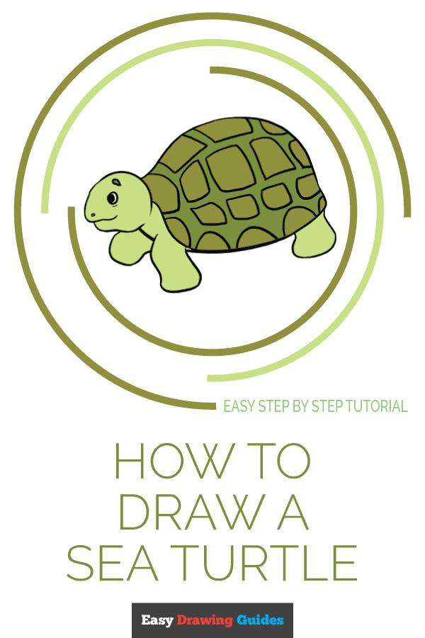 How to Draw Sea Turtle | Share to Pinterest