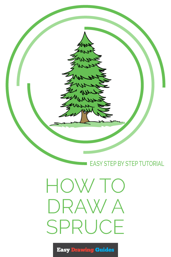 How to Draw Spruce | Share to Pinterest