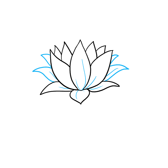 How to Draw Lotus Flower: Step 7