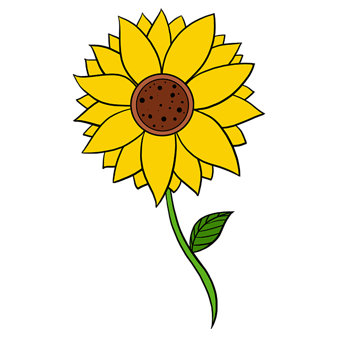 How to Draw Sunflower: Step 10