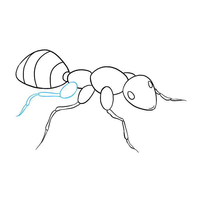 How to Draw Ant: Step 8