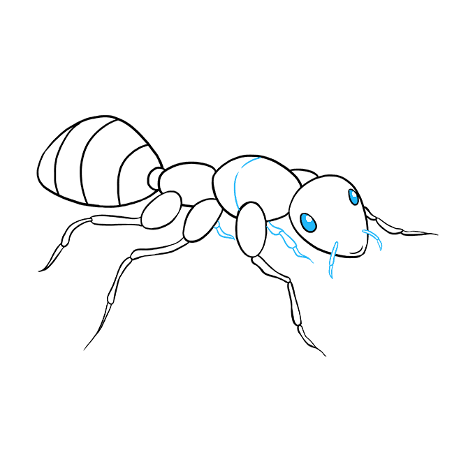 How to Draw Ant: Step 9