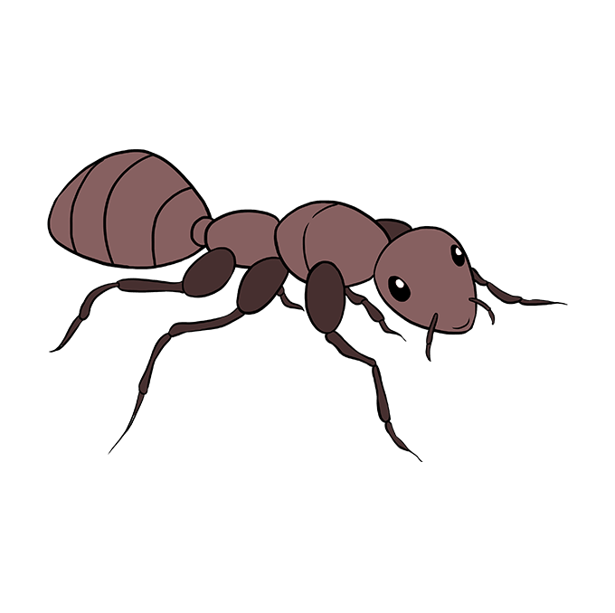 How to Draw Ant: Step 10