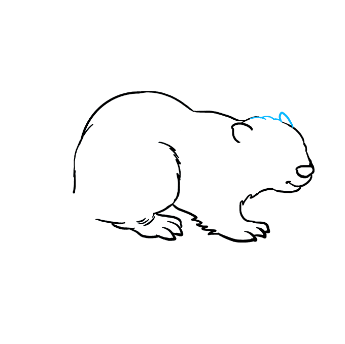 How to Draw Beaver: Step 6